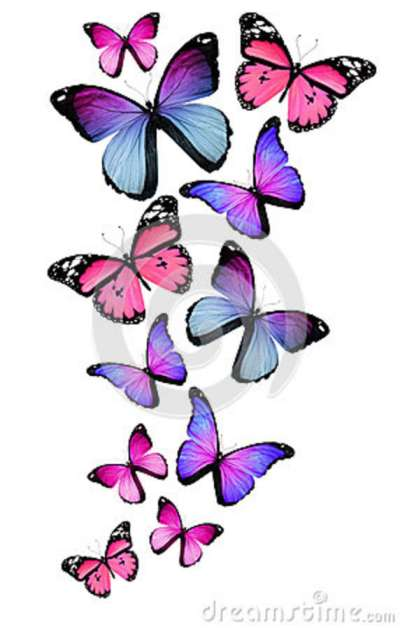 many-different-butterflies-white-background-28072834